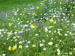 Wild Flowers by Highway. (Bumblebee Conservation Trust)